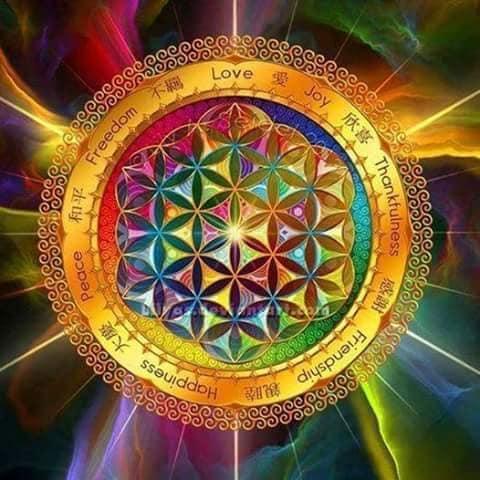 fiore della vita colorato